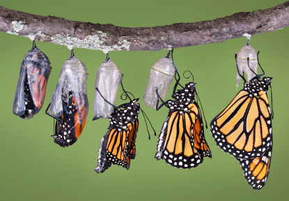 Insights About the Nonprofit Leadership Transition Process